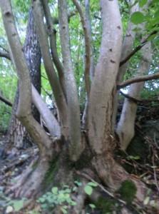 """Von wegen Waldsterben und sauerer Regen - eines der Lügenpropganda-Delikte der Grünen in den 80er- und 90er-Jahren - Der Wald breitet sich immer mehr aus. (Foto: """"Lieblingsbaum"""")"""