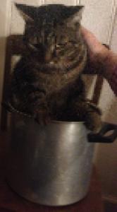 Katzenfleisch s